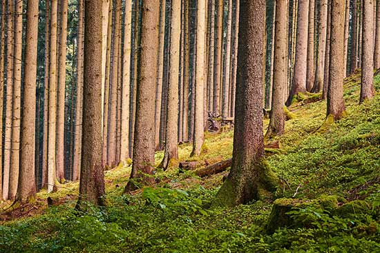 Inventaire Forestier