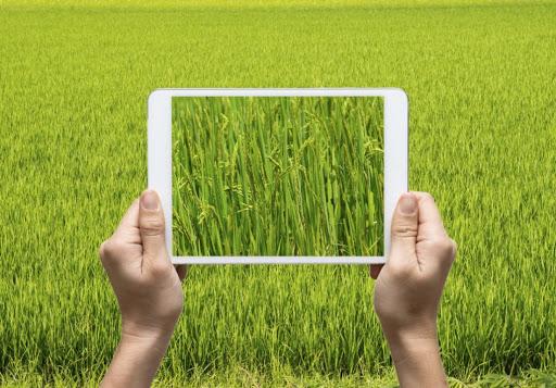 Digitalisation des actions de conseil agricole ( Groupe 1)
